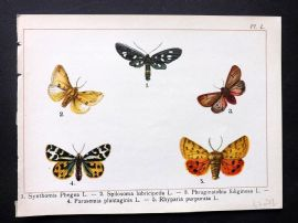 Joanny Martin 1902 Antique Butterfly Print 50